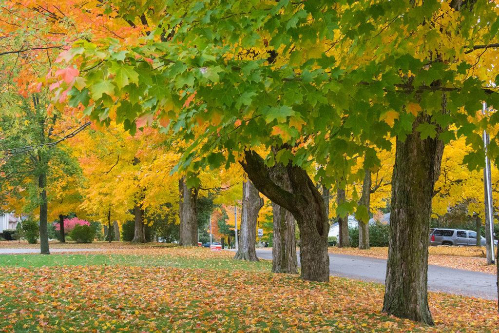 2014-10-Fall-Leaves-Strickland-0011